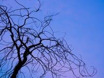 Silhueta seca dos ramos Imagens de Stock Royalty Free