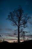 Silhueta sombrio escura da árvore alta no por do sol Foto de Stock
