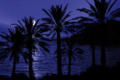 Silhueta tropical da noite Fotografia de Stock Royalty Free