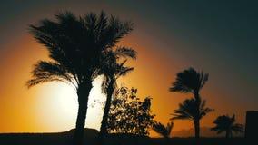 Silhueta tropical das palmeiras no fundo do por do sol, e nos esboços das montanhas video estoque