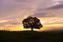 Silhuetas, árvores grandes no prado, e céu bonito Imagem de Stock Royalty Free