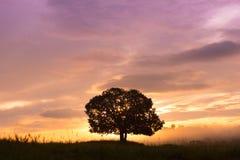 Silhuetas, árvores grandes no prado, e céu bonito Fotos de Stock