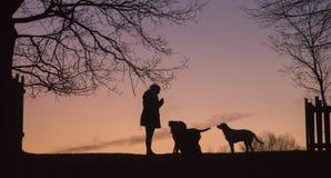 silhuetas Foto de Stock