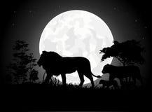 Silhuetas bonitas da família do leão com fundo gigante da lua Imagens de Stock