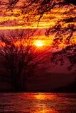 Silhuetas bonitas das árvores contra o por do sol vermelho Textura ou fundo agradável para papéis de parede e ilustrações Moravi  imagem de stock royalty free