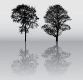 Silhuetas da árvore Imagens de Stock