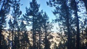 Silhuetas da árvore fotografia de stock royalty free