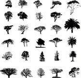 Silhuetas da árvore ajustadas Fotos de Stock