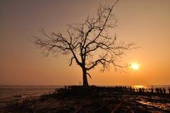 Silhuetas da árvore durante o por do sol Fotografia de Stock Royalty Free