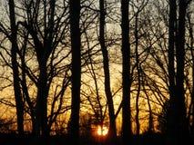 Silhuetas da árvore no por do sol no outono Fotografia de Stock Royalty Free