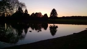 Silhuetas da árvore, refletindo em uma lagoa, crepúsculo, patos Fotos de Stock Royalty Free