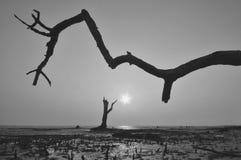 Silhuetas da árvore velha Fotos de Stock Royalty Free