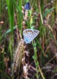 Silhuetas da borboleta Fotografia de Stock
