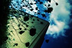 Silhuetas da flora fotografia de stock