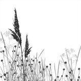 Silhuetas da grama/vetor/separado ilustração royalty free
