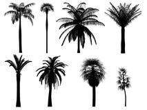 Silhuetas da palmeira Foto de Stock