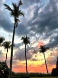 Silhuetas da palmeira contra o por do sol Fotografia de Stock