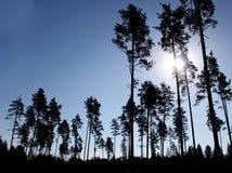 Silhuetas das árvores Fotos de Stock Royalty Free