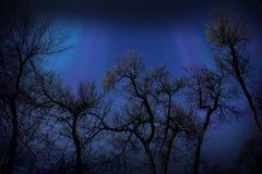 Silhuetas das árvores contra o céu noturno foto de stock