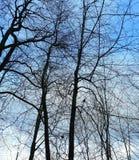 Silhuetas das árvores contra o céu sombrio imagens de stock