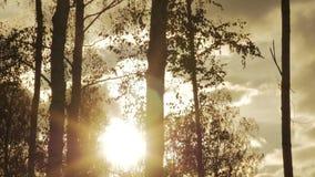 Silhuetas das árvores contra o contexto do timelapse do céu do outono vídeos de arquivo