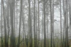 Silhuetas das árvores em um dia nebuloso Foco borrado imagens de stock