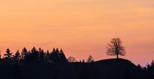 Silhuetas das árvores em um monte em cumes suíços Fotos de Stock
