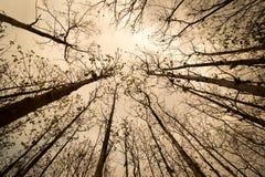 Silhuetas das árvores em uma floresta seca em Tailândia Fotos de Stock Royalty Free