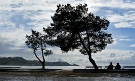 Silhuetas das árvores na costa de mar Imagem de Stock Royalty Free