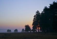 silhuetas das árvores no campo contra o céu da noite Foto de Stock