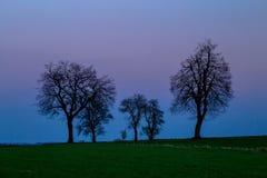Silhuetas das árvores no por do sol fotografia de stock