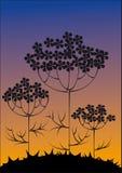 Silhuetas das flores de encontro ao céu da noite Ilustração Royalty Free