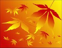 Silhuetas das folhas Imagens de Stock