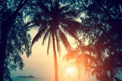 Silhuetas das folhas de palmeira contra o céu durante o por do sol nave Fotografia de Stock Royalty Free