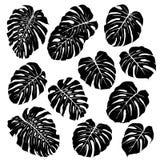 Silhuetas das folhas do monstera Jogo de silhuetas do vetor Imagens de Stock Royalty Free