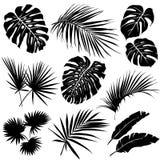 Silhuetas das folhas tropicais Imagem de Stock