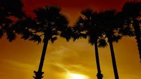 Silhuetas das palmas na praia contra o contexto do sol de ajuste fotografia de stock royalty free
