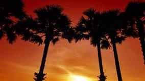 Silhuetas das palmas na praia contra o contexto do sol de ajuste fotos de stock royalty free