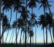 Silhuetas das palmeiras Fotos de Stock Royalty Free