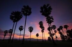 Silhuetas das palmeiras Foto de Stock