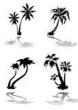 Silhuetas das palmeiras Fotografia de Stock Royalty Free