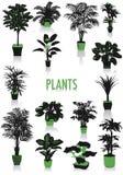 Silhuetas das plantas Imagem de Stock