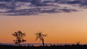 Silhuetas de árvores desencapadas, por do sol alaranjado, Austrália Foto de Stock Royalty Free
