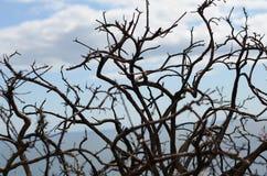 Silhuetas de árvores secadas pela costa de mar em Howth, Irlanda Imagens de Stock