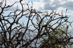 Silhuetas de árvores secadas pela costa de mar em Howth, Irlanda Imagens de Stock Royalty Free