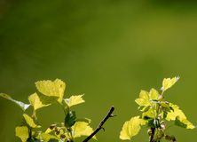 Silhuetas de brilho das folhas recurrant Imagens de Stock