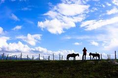 Silhuetas de dois cavalos e de uma fêmea Imagens de Stock