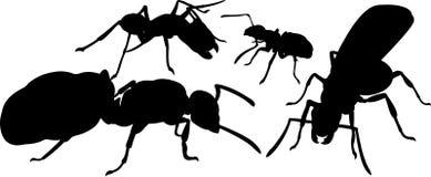 Silhuetas de formigas diferentes ilustração royalty free