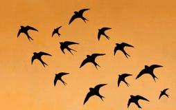 Silhuetas de muitas andorinhas Fotografia de Stock