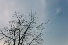 silhuetas de pássaros de voo com árvore imagens de stock